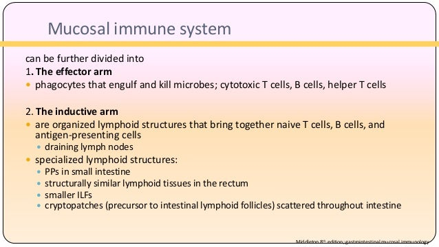 Immune System And Gastrointestinal >> Mucosal Immunity Of Gastrointestinal Tract