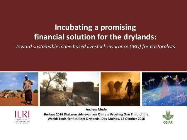 Incubating a promising financial solution for the drylands: Toward sustainable index-based livestock insurance (IBLI) for ...