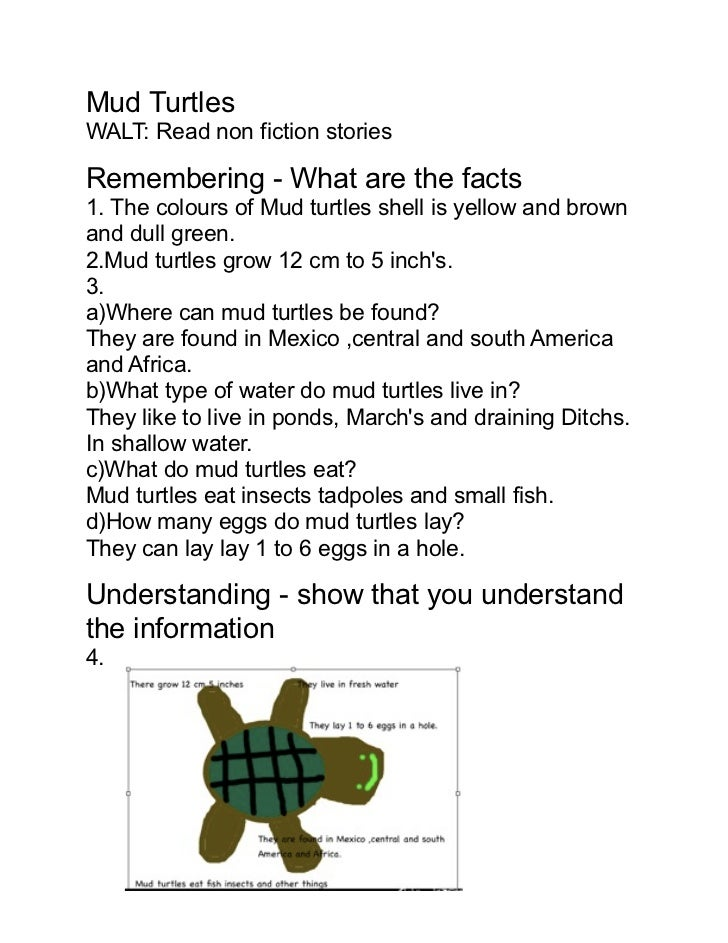 Mud TurtlesWALT: Read non fiction storiesRemembering - What are the facts1. The colours of Mud turtles shell is yellow and...