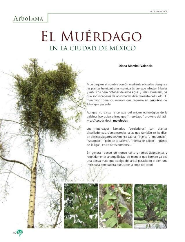 ArbolAMAno.2 marzo 2009Muérdago es el nombre común mediante el cual se designa alas plantas hemiparásitas –semiparásitas- ...