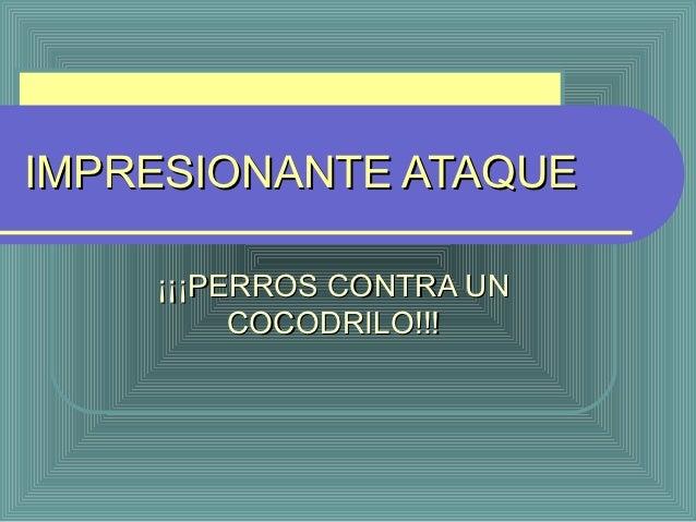 IMPRESIONANTE ATAQUE    ¡¡¡PERROS CONTRA UN         COCODRILO!!!