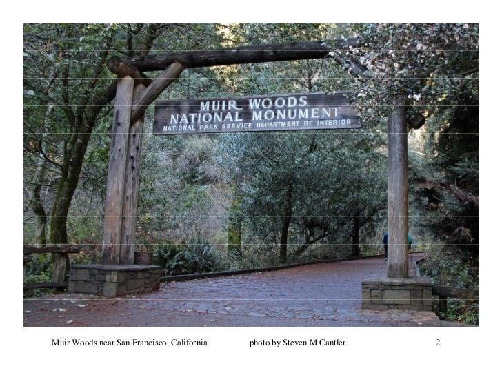 Muir Woods near San Francisco, California   photo by Steven M Cantler   2