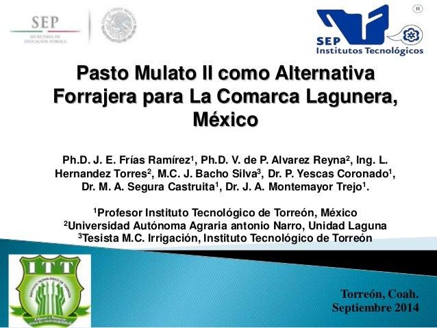 Torreón, Coah. Septiembre 2014 Pasto Mulato II como Alternativa Forrajera para La Comarca Lagunera, México Ph.D. J. E. Frí...