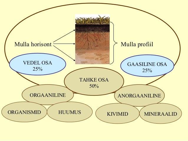 MULLA KOOSTIS VEDEL OSA 25% ANORGAANILINEORGAANILINE ORGANISMID HUUMUS KIVIMID MINERAALID TAHKE OSA 50% GAASILINE OSA 25% ...