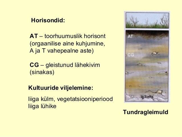 Tundragleimuld Horisondid: AT – toorhuumuslik horisont (orgaanilise aine kuhjumine, A ja T vahepealne aste) CG – gleistunu...