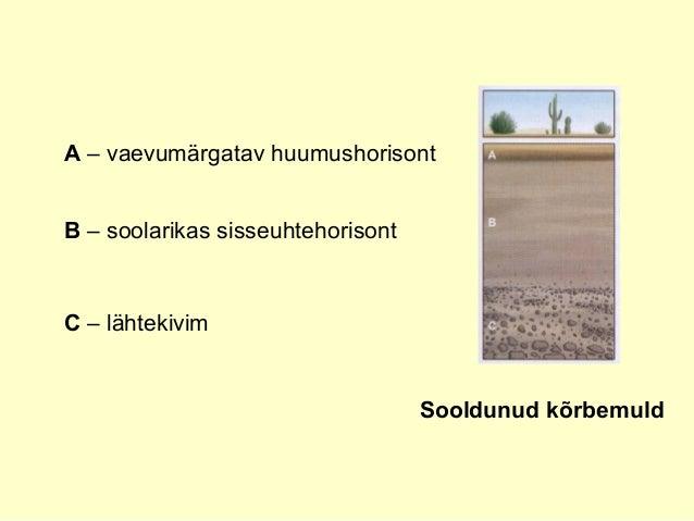 Sooldunud kõrbemuld A – vaevumärgatav huumushorisont B – soolarikas sisseuhtehorisont C – lähtekivim