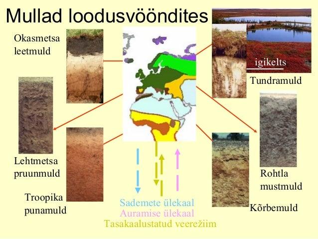 Mullad loodusvööndites igikelts Tundramuld Okasmetsa leetmuld Lehtmetsa pruunmuld Rohtla mustmuld Kõrbemuld Troopika punam...