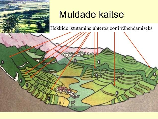 Muldade kaitse Metsa säilitamine nõlvadelTerrasside rajamineRibapõllundus laugetel nõlvadelVooluvete reguleerimineMetsarib...