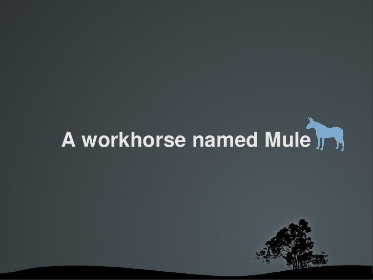 A workhorse named Mule