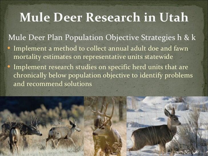 Mule Deer Research in Utah <ul><li>Mule Deer Plan Population Objective Strategies h & k  </li></ul><ul><li>Implement a met...