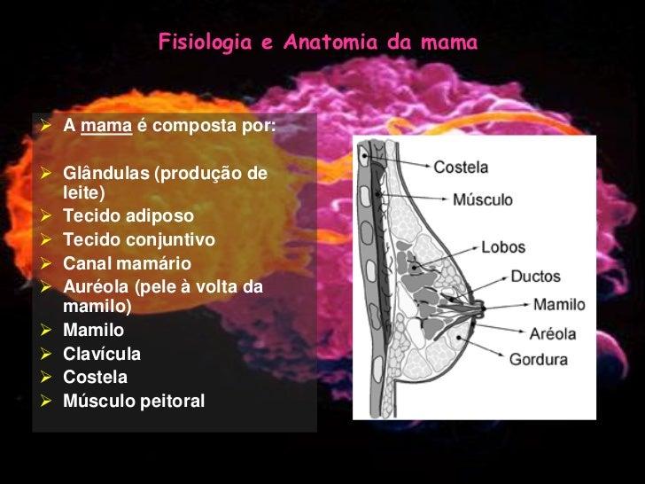 Anatomia e fisiologia da mulher