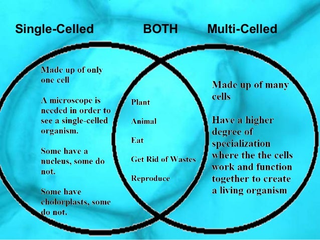 Multi And Single Celled Organisms Comparisons