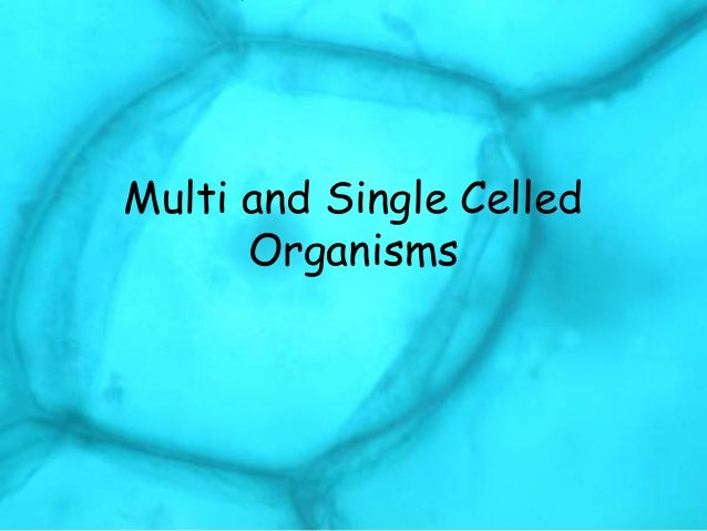 One Celled Organism >> Multi And Single Celled Organisms Comparisons