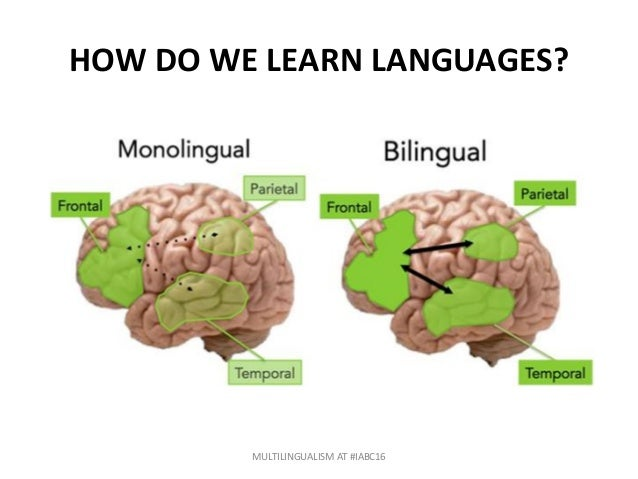 cognitive outcomes of multilingualism versus bilingualism and monolingualism Bilingualism positively predicts mathematical competence: evidence from  bilingualism, compared to monolingualism,  between bilingualism and cognitive.