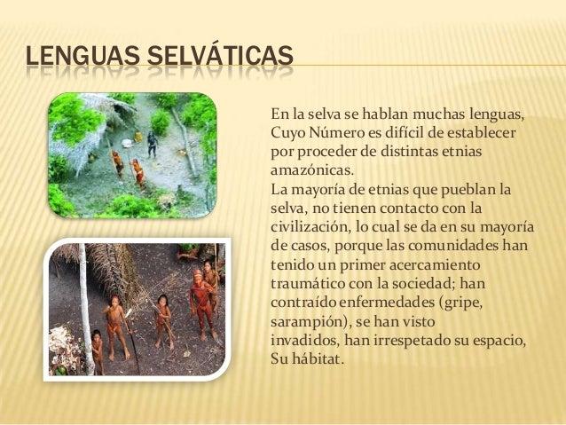 UBICACIÓN GEOGRAFICA: • • • • • •  Ucayali: (Coronel Portillo) Cusco: (Convención) Huánuco: (puerto inca) Junín: (satipo) ...