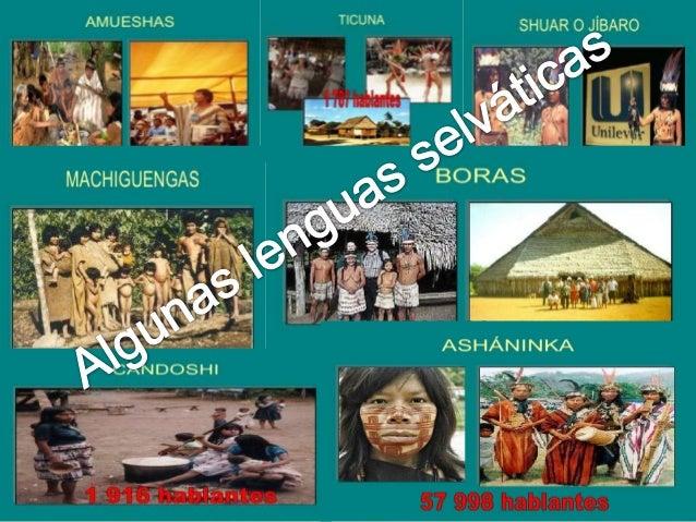 SINTESIS HISTORICA: Los asháninkas han sido tradicionalmente  ORGANIZACION SOCIAL:  conocidos como campas. Ellos vivían  L...