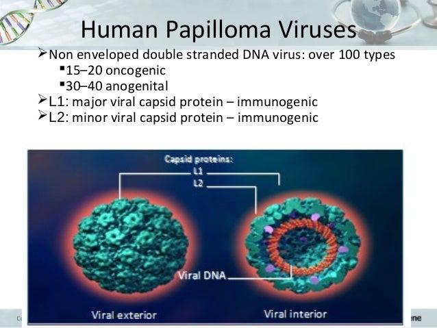 Multipex For Papillomavirus
