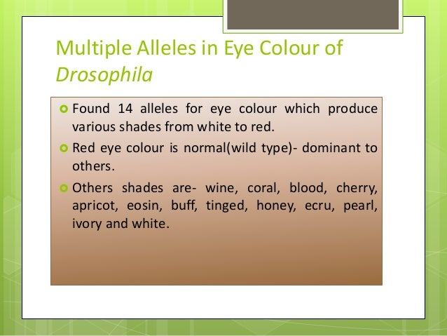 what are multiple alleles