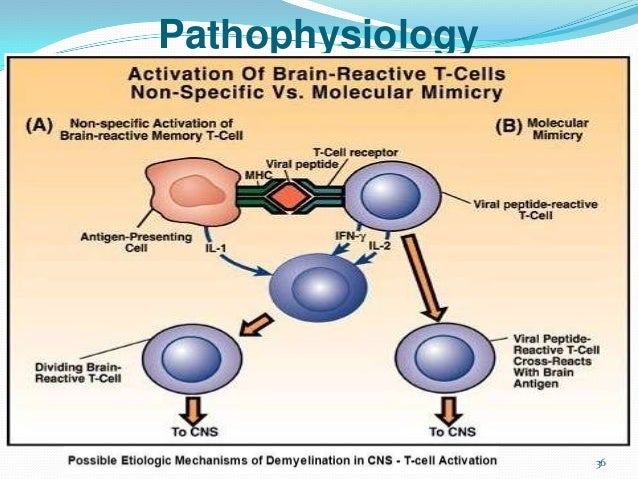 Chapter13 Cns Part2marieb moreover Module7 3 likewise Pathology Of Meningitis Cns Infections together with Fulltext together with 4337849. on cns diagram