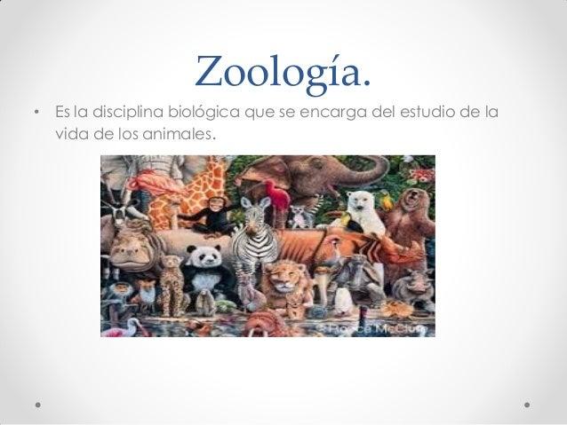 Zoología. • Es la disciplina biológica que se encarga del estudio de la vida de los animales.