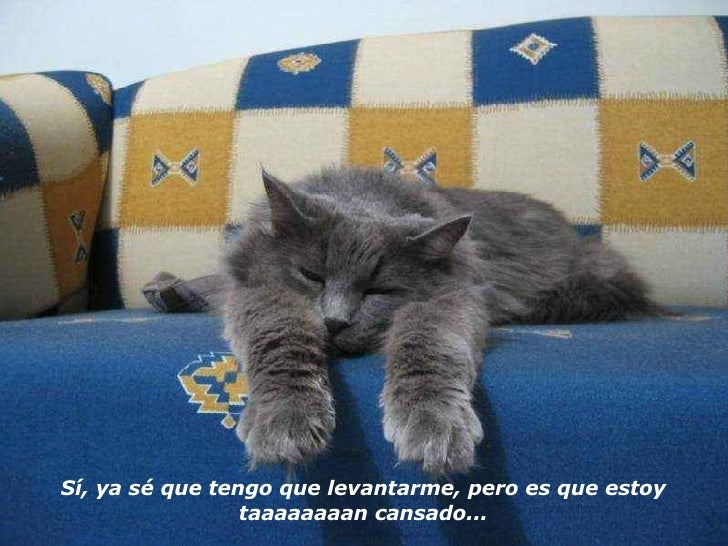 Sí, ya sé que tengo que levantarme, pero es que estoy taaaaaaaan cansado...