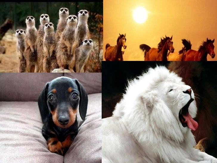 Mundo Animal Grandes seres en el universo