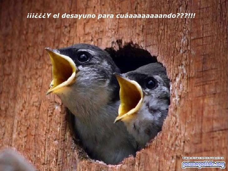 ¡¡¡¿¿¿Y el desayuno para cuáaaaaaaaando???!!!