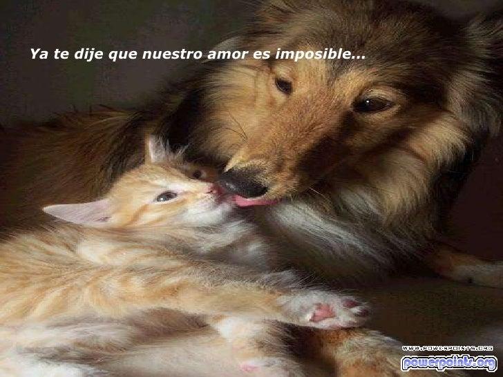 Ya te dije que nuestro amor es imposible...