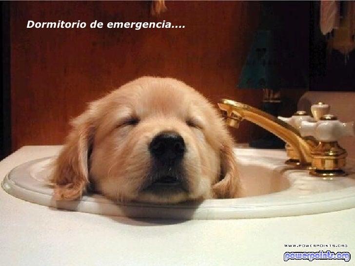 Dormitorio de emergencia....