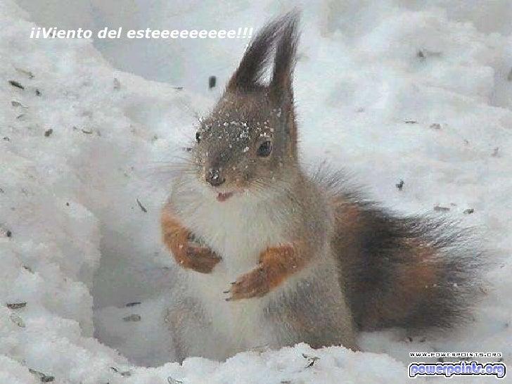 ¡¡Viento del esteeeeeeeee!!!