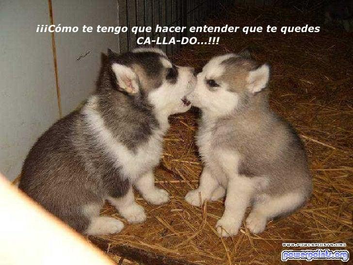 ¡¡¡Cómo te tengo que hacer entender que te quedes CA-LLA-DO...!!!