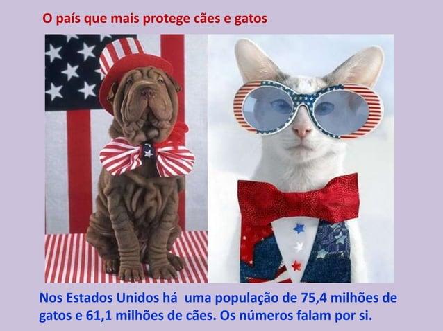 O país que mais protege cães e gatos Nos Estados Unidos há uma população de 75,4 milhões de gatos e 61,1 milhões de cães. ...