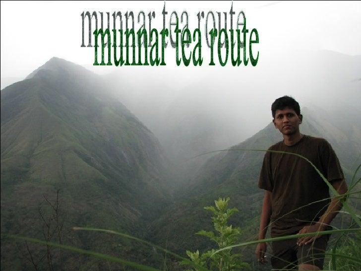 Munnar Tea Route