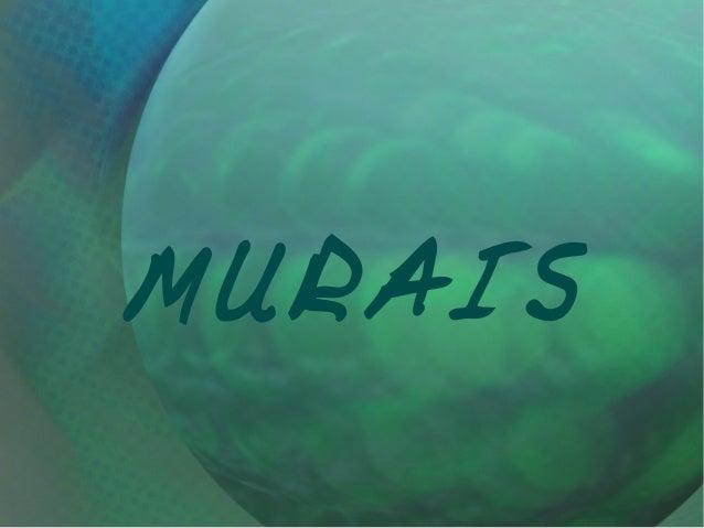 MURAIS
