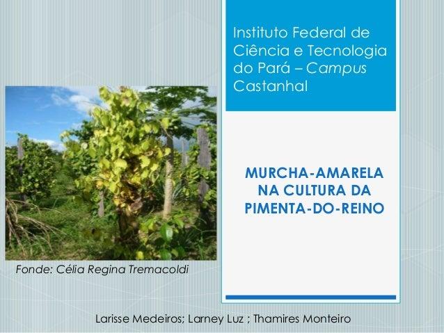 MURCHA-AMARELANA CULTURA DAPIMENTA-DO-REINOLarisse Medeiros; Larney Luz ; Thamires MonteiroInstituto Federal deCiência e T...