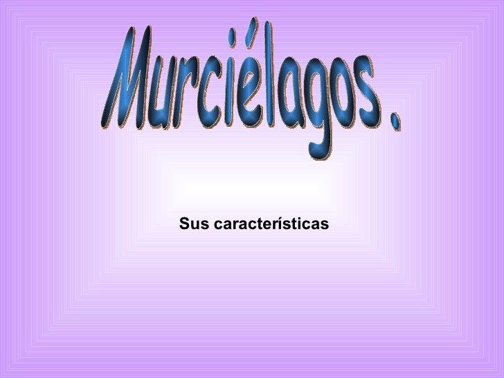 Sus características   Murciélagos.