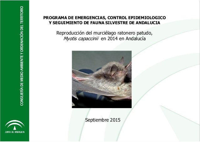 Consejería de Medio Ambiente y Ordenación del Territorio. Junta de Andalucía Reproducción de Myotis capaccinii 2014. Infor...
