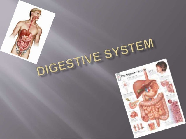  What is Digestive System?  Stages of digestion  Parts of Digestive System. -mouth. -pharynx etc..  A problem of the D...