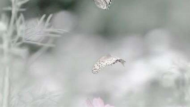 Quem foi que viu a natureza em festa E a nascente gotejar a flor? � primavera vem cuidar de mim � musa doce vem falar de a...
