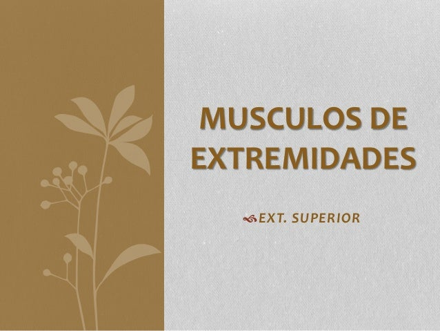 EXT. SUPERIOR MUSCULOS DE EXTREMIDADES