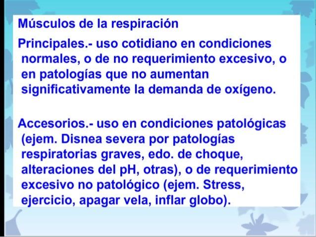 Músculos principales y accesorios de la respiración