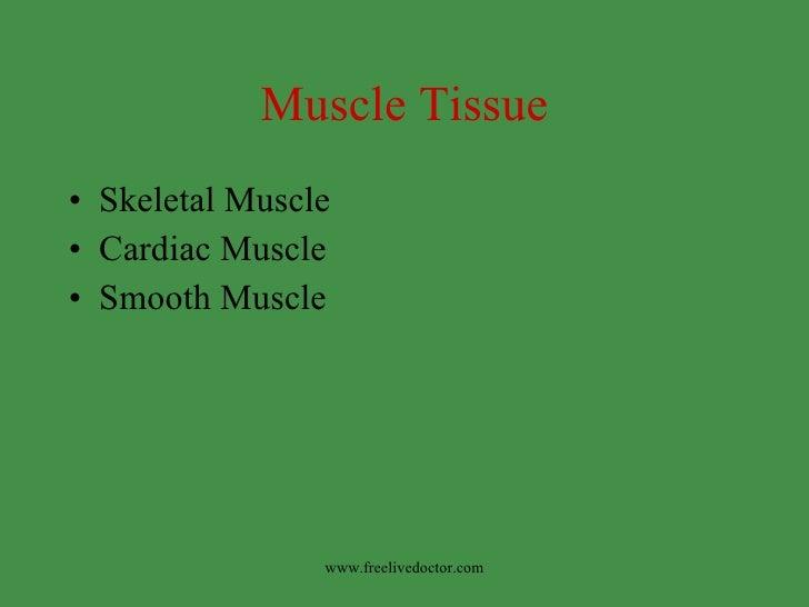 Muscle Tissue <ul><li>Skeletal Muscle </li></ul><ul><li>Cardiac Muscle </li></ul><ul><li>Smooth Muscle </li></ul>www.freel...