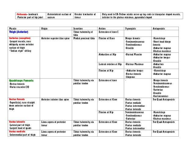 Leg Muscles Chart Erkalnathandedecker