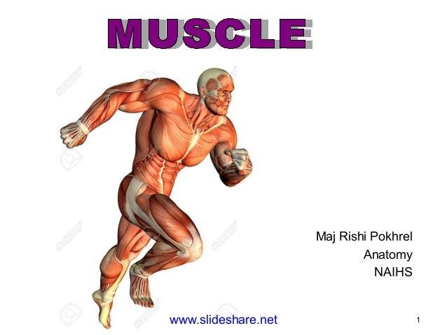 www.slideshare.net 1 Maj Rishi Pokhrel Anatomy NAIHS