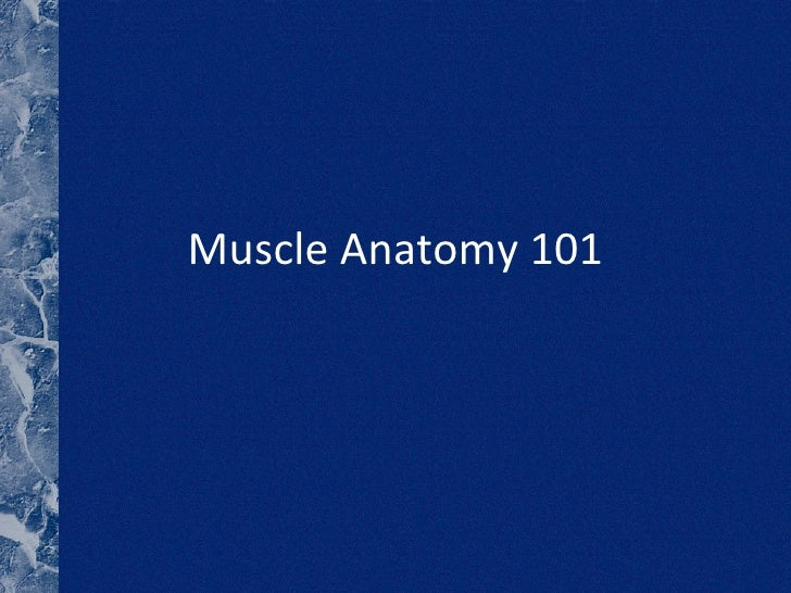 Muscle Anatomy 101