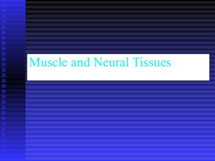 Muscle and Neural Tissues
