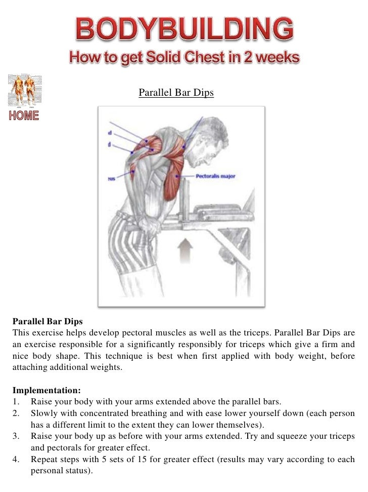 Muscle Diagram Website 2