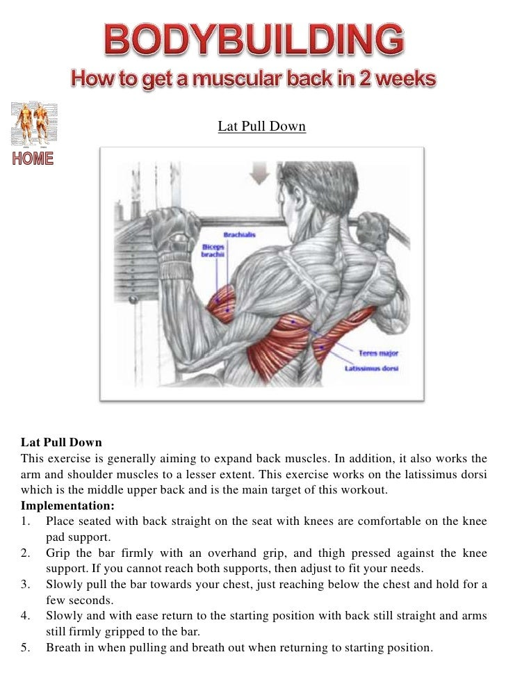 Diagram Lat Pull Diy Enthusiasts Wiring Diagrams