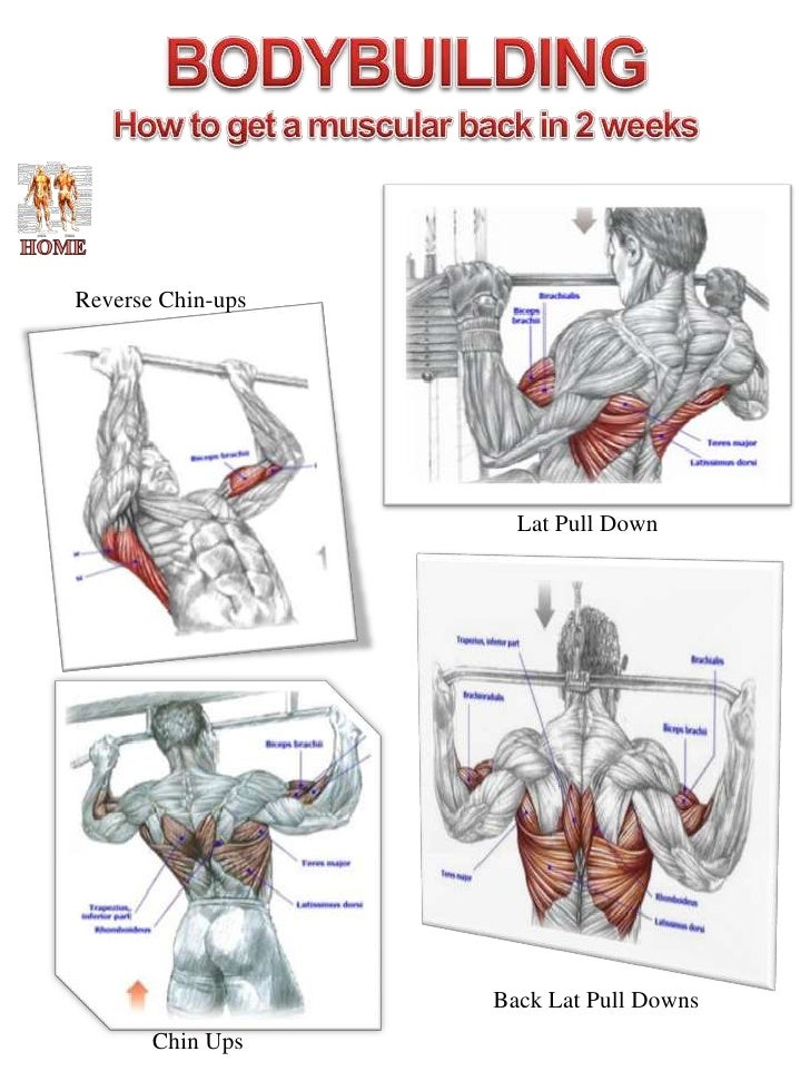 Pull Up Muscle Diagram - Wiring Circuit •