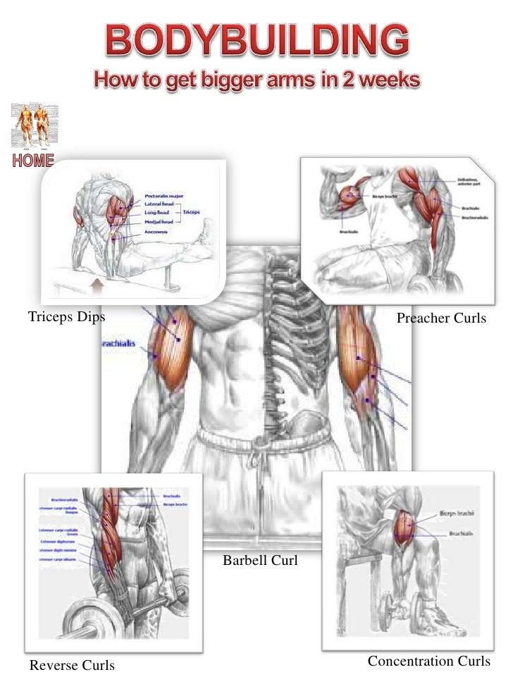 Row Muscle Diagram Wiring Circuit